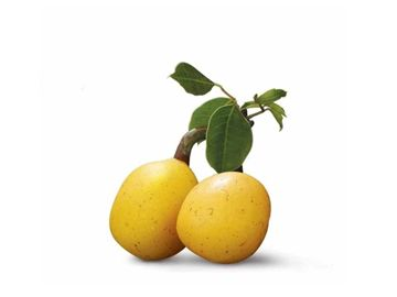 The Benefits Of Marula Oil