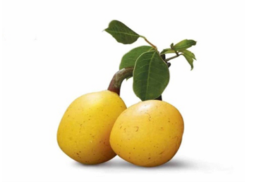 What Is Marula Oil?
